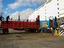 Embarque a China de unas 7.000 terneras y vaquillonas de la raza lechera holando, de más de 500 productores