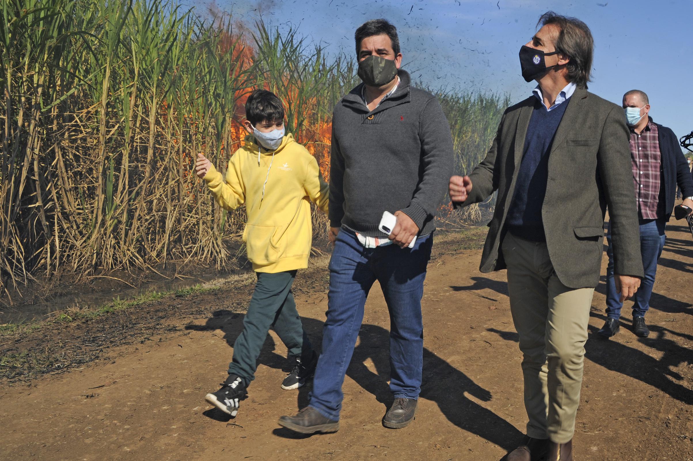 Lacalle Pou en zafra de la cosecha de caña de azúcar en Bella Unión