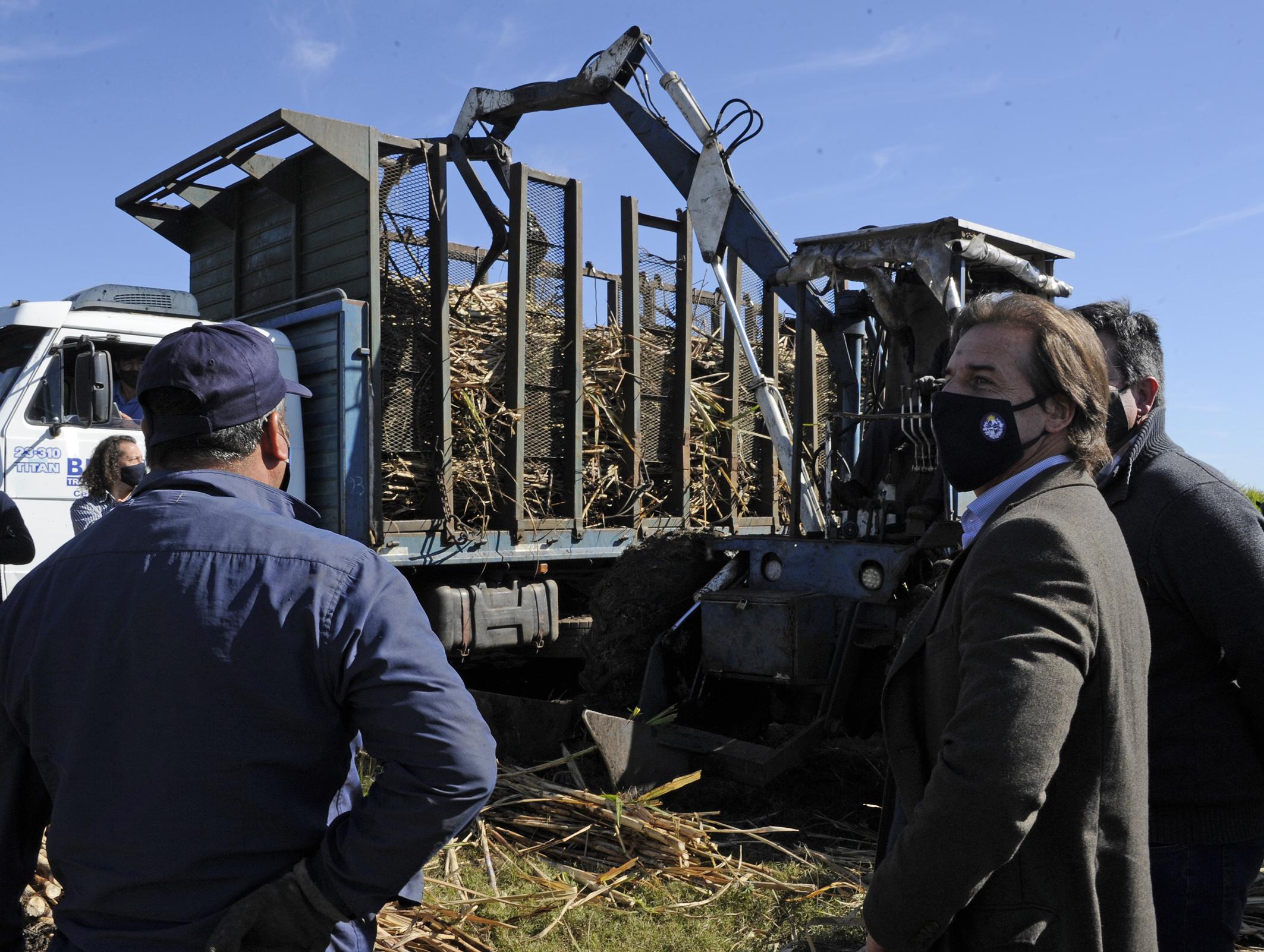 Lacalle Pou, en zafra de la cosecha de caña de azúcar en Bella Unión